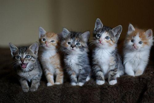 Kittiesssss!!