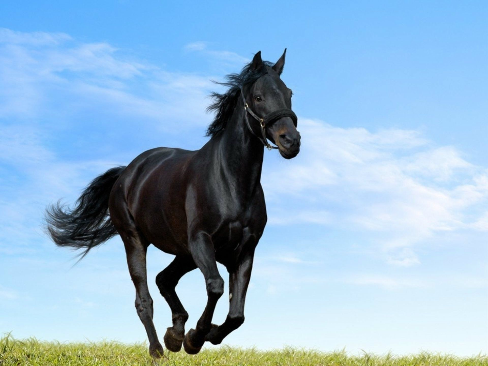 Horse Wallpapers Hd Pictures Free Download Hd Walls Horse Background Horse Wallpaper Horses