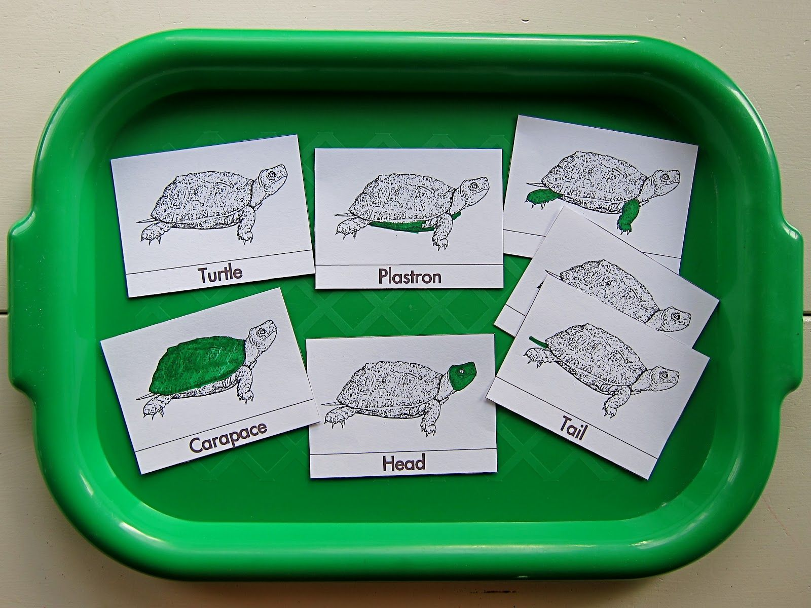 Joyfully Weary Preschool Syllabus Reptiles