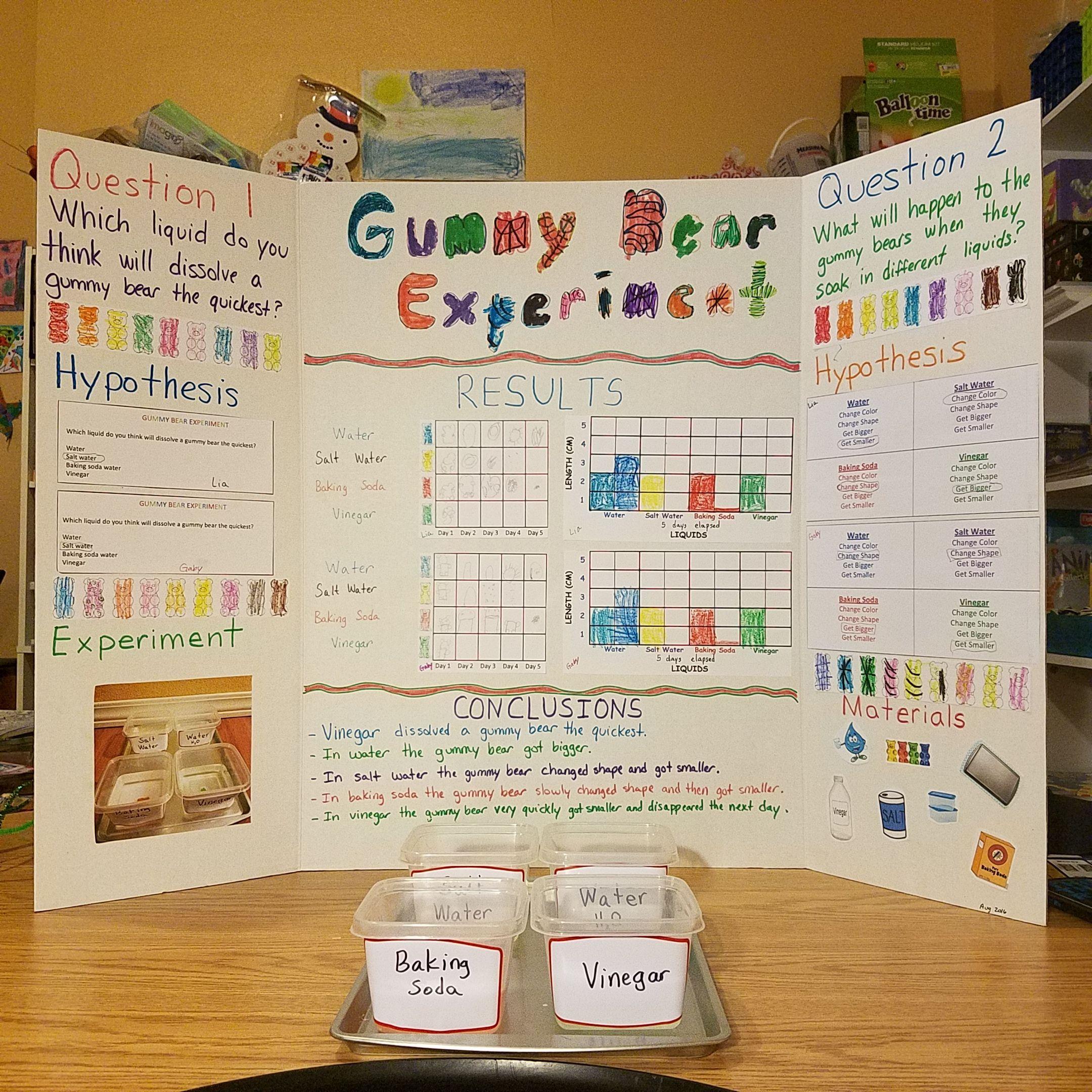 Scientific Method Gummy Bear Experiment Science Fair