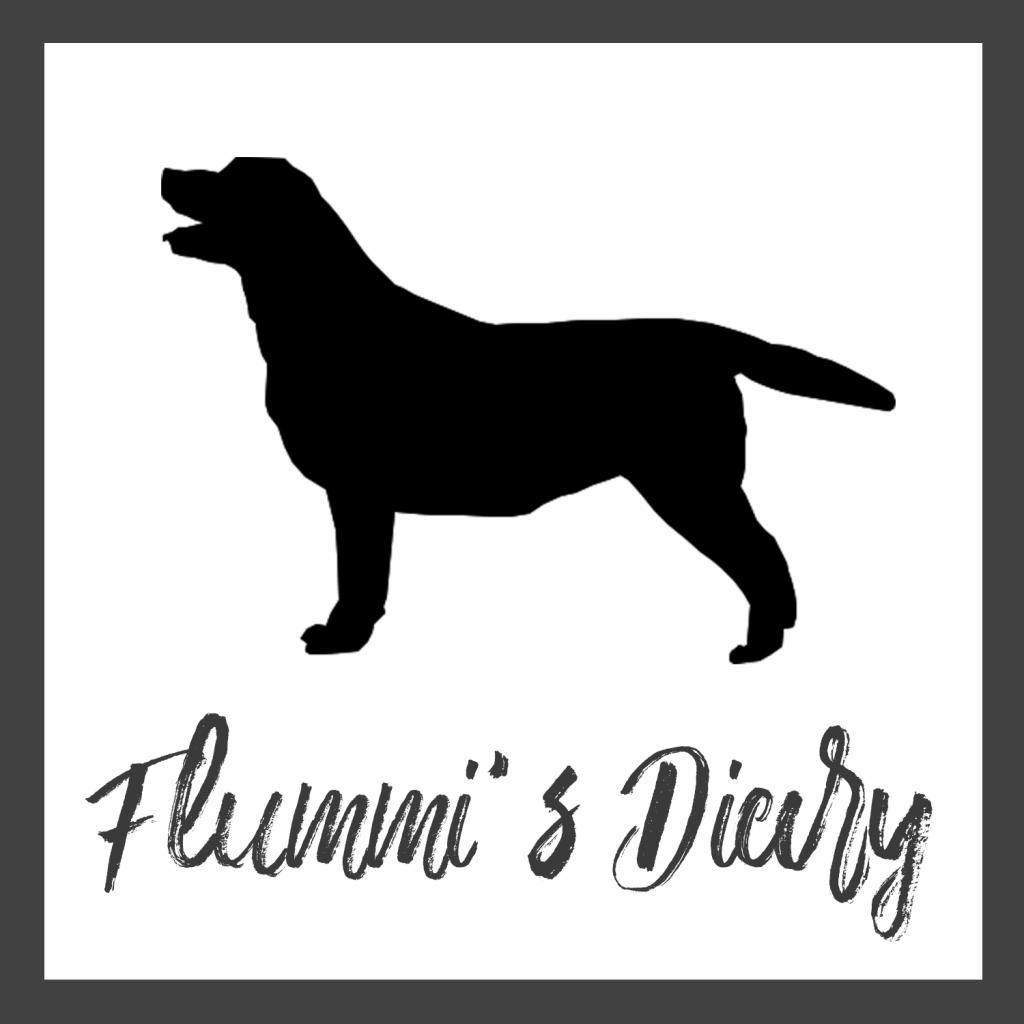 Lifeupdate Berufstatig Mit Hund Hunde Flummi Spielzeug Hund
