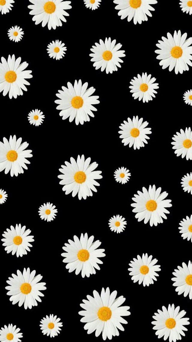 Pin by mary zeidan on Wallpaper Daisy wallpaper, Iphone