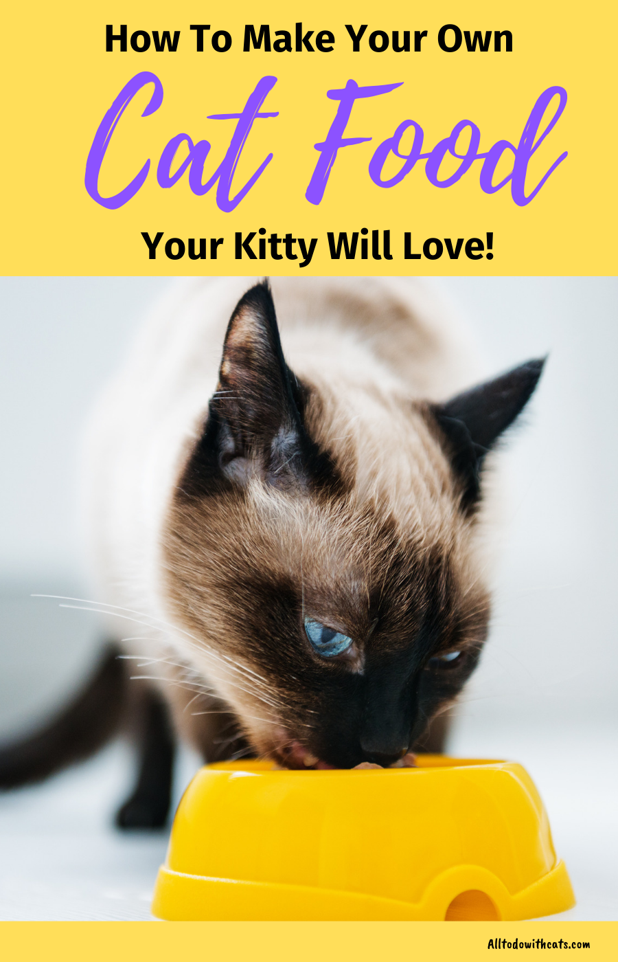 How To Make Your Own Cat Food For A Healthy Kitty! Cat
