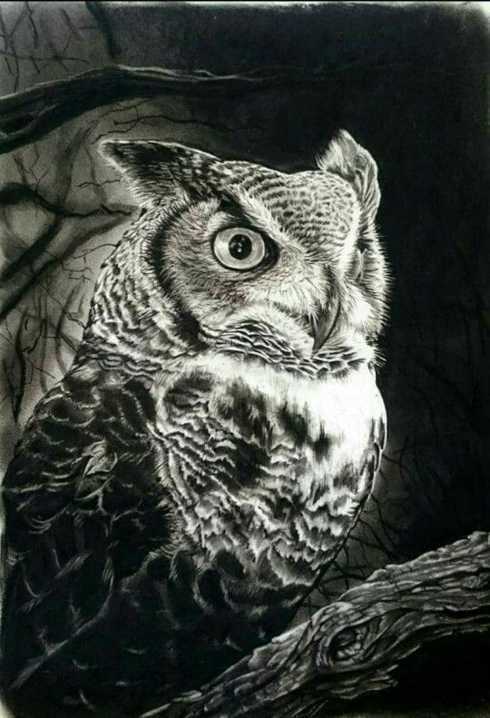 Amazing hyper-realistic charcoal drawing of owl - Gary ...