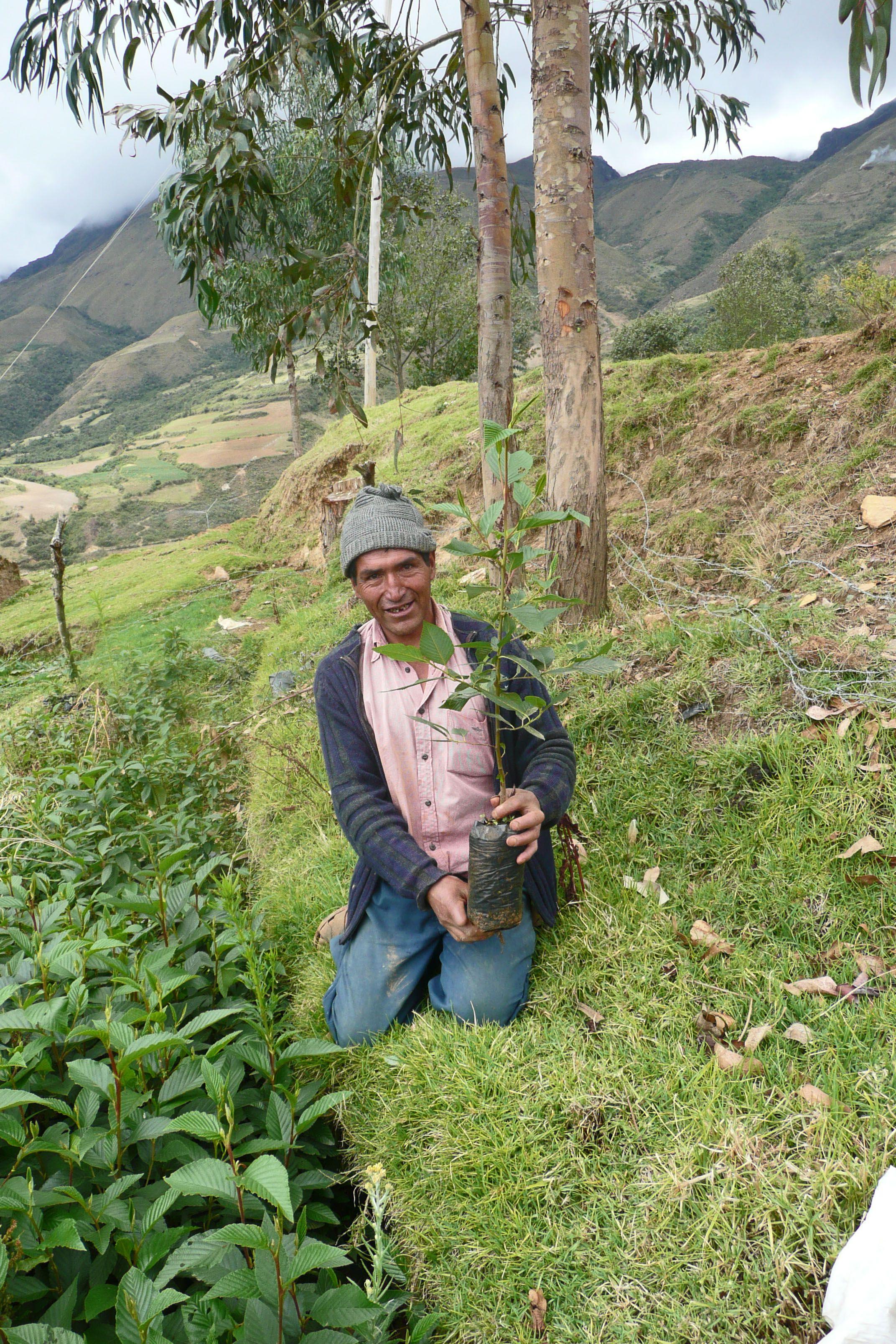 Manuel Vega y su vivero de alisos arboles nativos de los Andes . Shismay, Huánuco Perú
