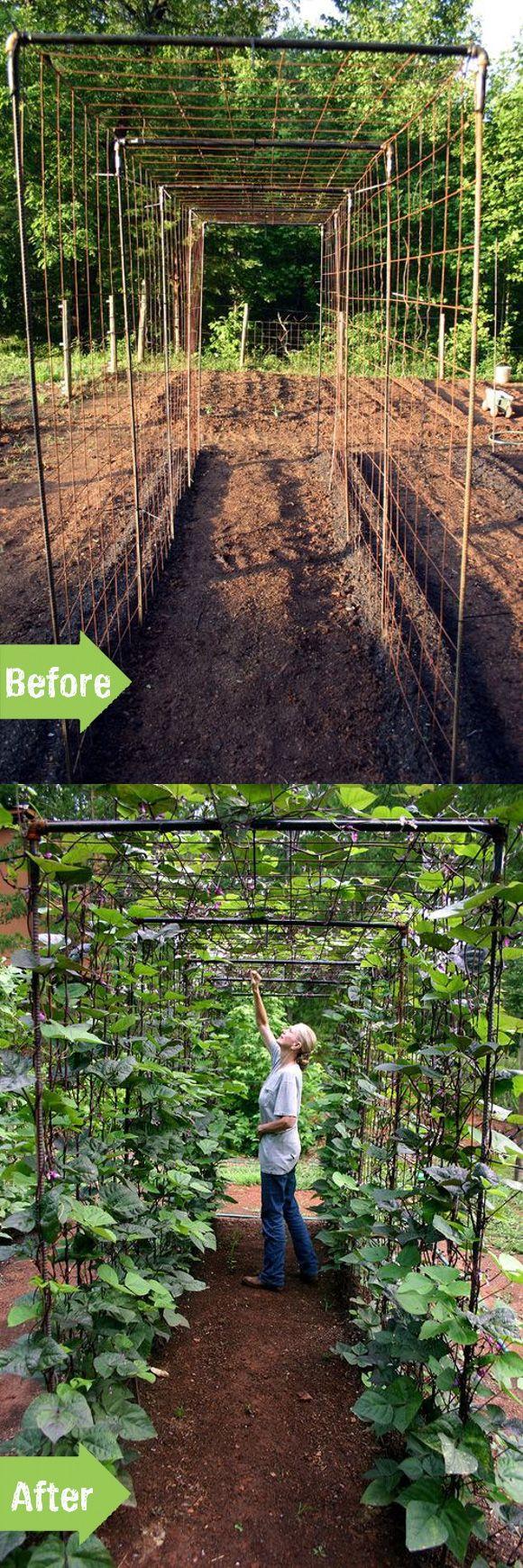 cr er un tunnel haricot jardin pinterest potager jardins et jardinage. Black Bedroom Furniture Sets. Home Design Ideas