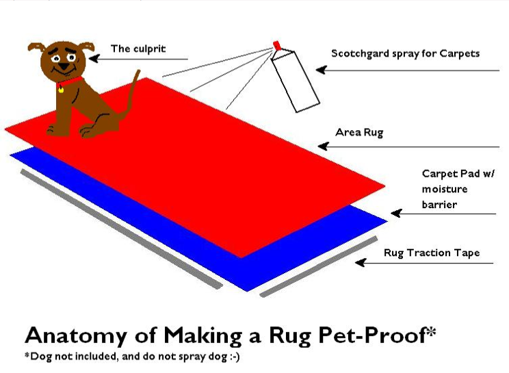 How to petproof a rug complete with a cute