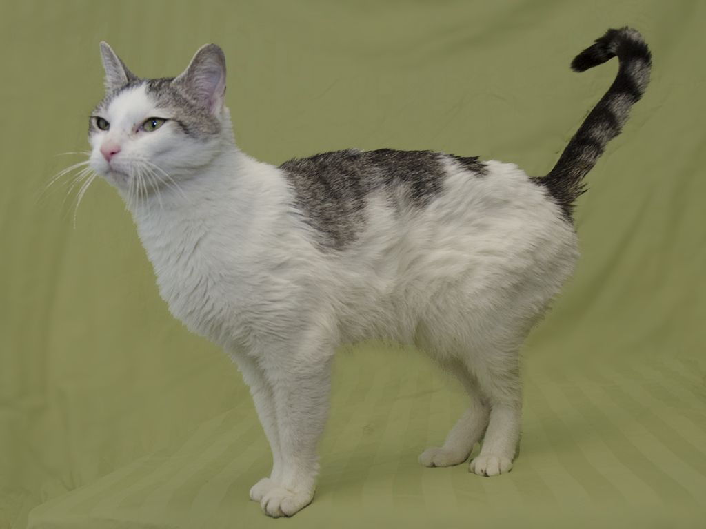 Collette Found A Foreverhome On 2 25 14 Livessaved Opt2adopt Kittylove Humane Society Animals Pets
