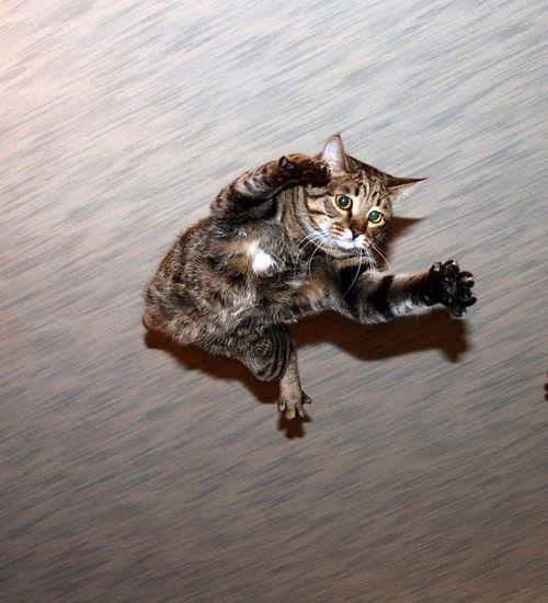 rispostesenzadomanda:  un gattino volante per rinfrancare lo spirito tra una fiducia e l'altra