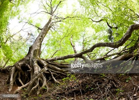abstract roots photography - Google Search