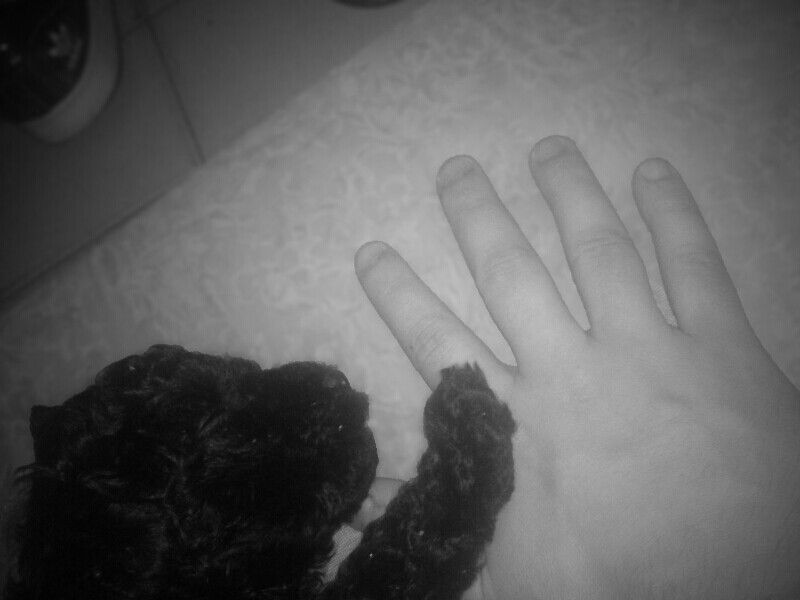 #dog #hands #black