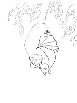 Stellaluna Hanging On Fruit Bat Coloring Pages Fruit Coloring