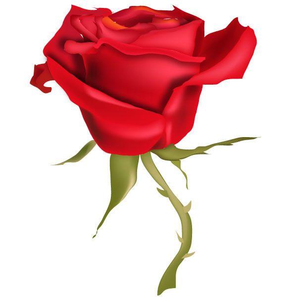 Red Rose Flower Vector Art Flower Vector Art Red Rose Flower Flower Art