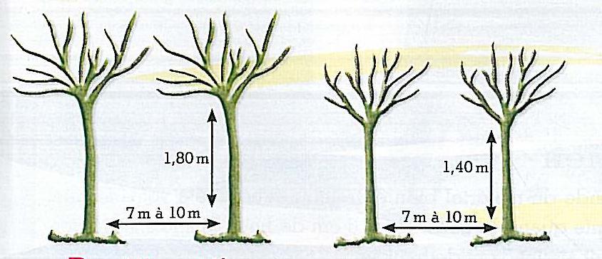 conseil quelle forme de fruitiers choisir arbres et arbustes fruitiers taille fruiti re. Black Bedroom Furniture Sets. Home Design Ideas