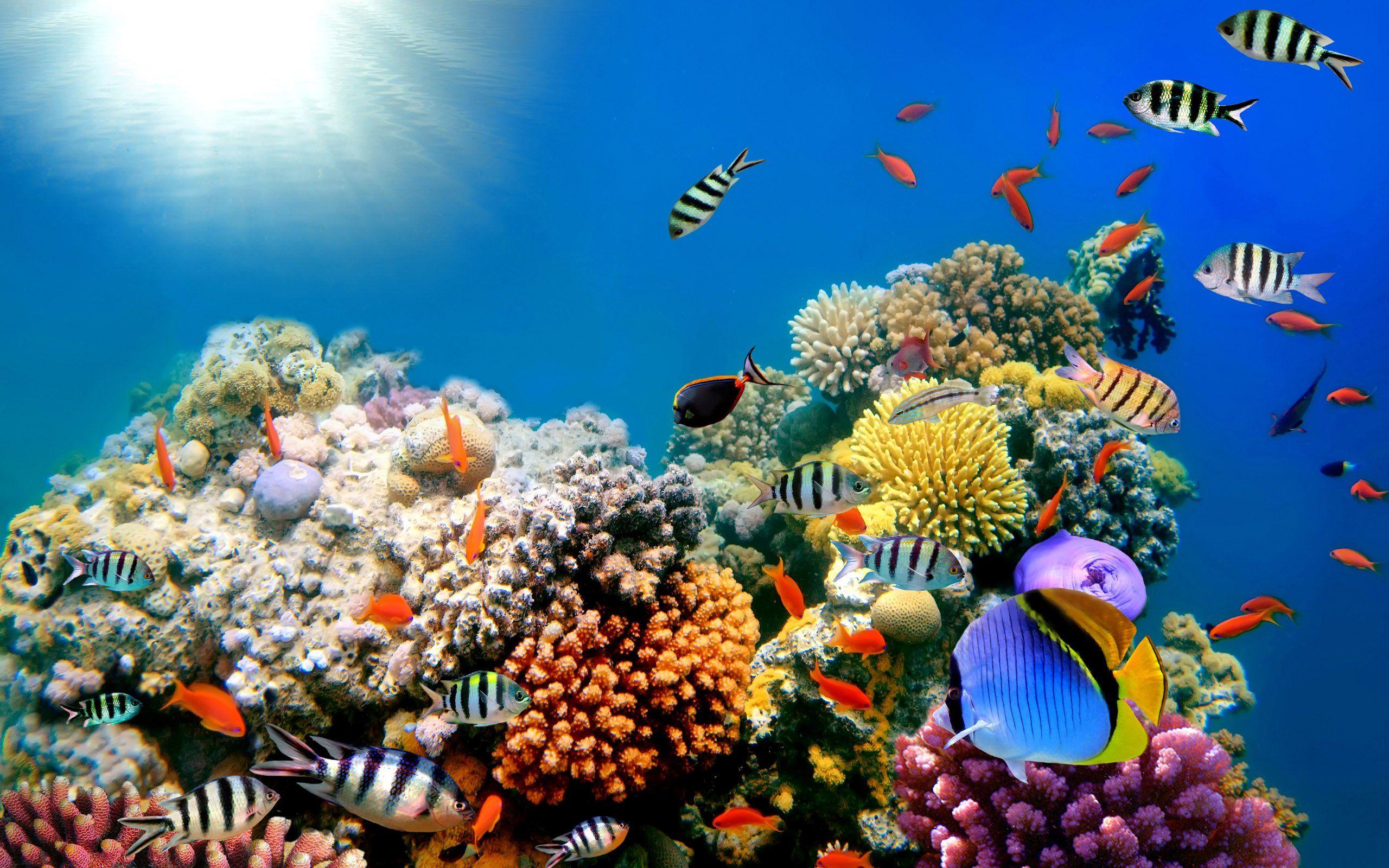 7 Marine Animals You Didn T Know Were Endangered Underwater Wallpaper Coral Wallpaper Aquarium Backgrounds
