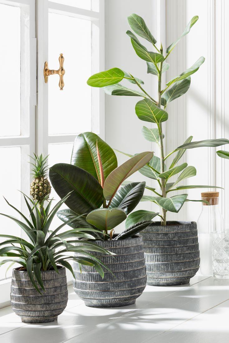 #Pflanzen in der #Wohnung - auch ohne grünen Daumen? Diese ...