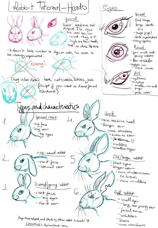 Rabbit Drawing tutorial pt1 - Characteristics by LadyFiszi   animal ...
