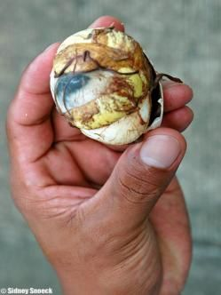 huevo de pato balut para diabetes
