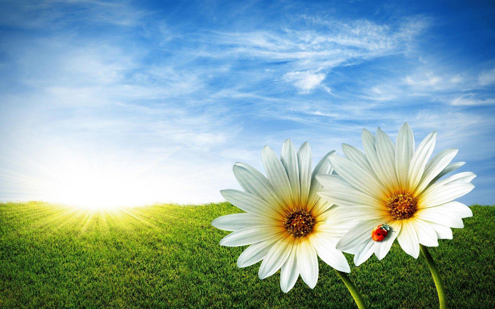 Flowers Downloads Spring Flowers 3d Wallpaper Download Free
