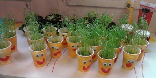 Faire pousser du bl ou des lentilles no l pinterest - Comment cuisiner des lentilles blondes ...