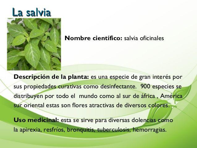 Resultado de imagen de plantas medicinales y para que for Para q sirven las plantas ornamentales