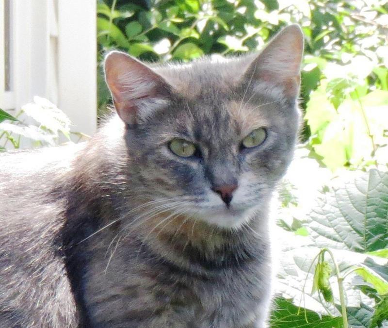 Adopt Josie On Petfinder Pet Care Pets Little Pets