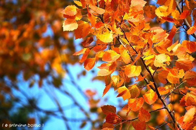 C'est l'automne! (Et c'est si beau!)