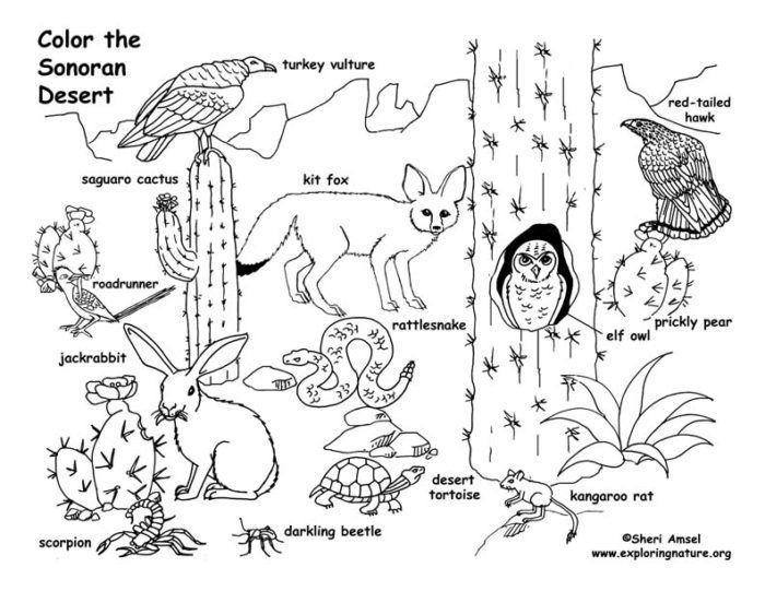 Sonoran Desert Coloring Pages Desert Animals Coloring Desert