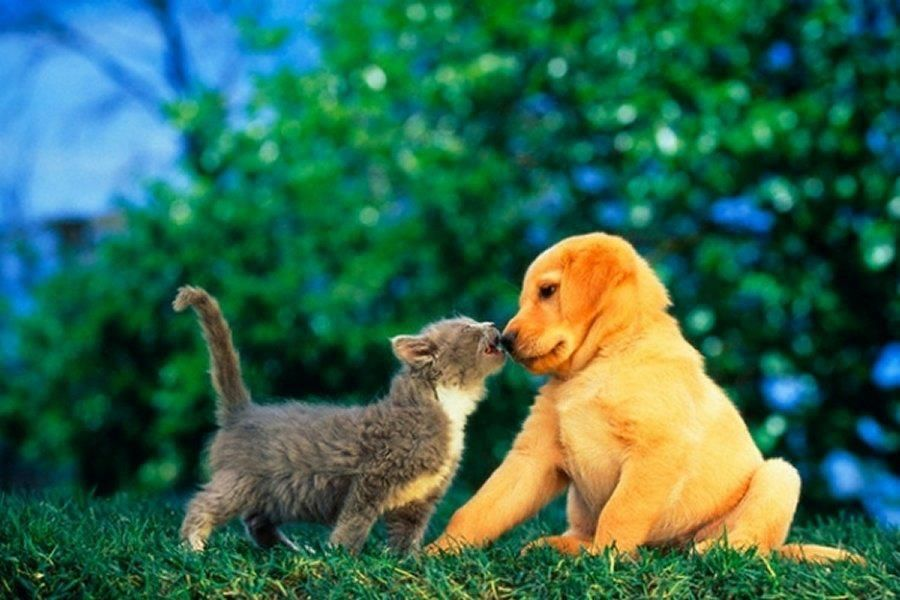 Puppy Love Cute Animals Funny Puppy Pictures Cute Dogs