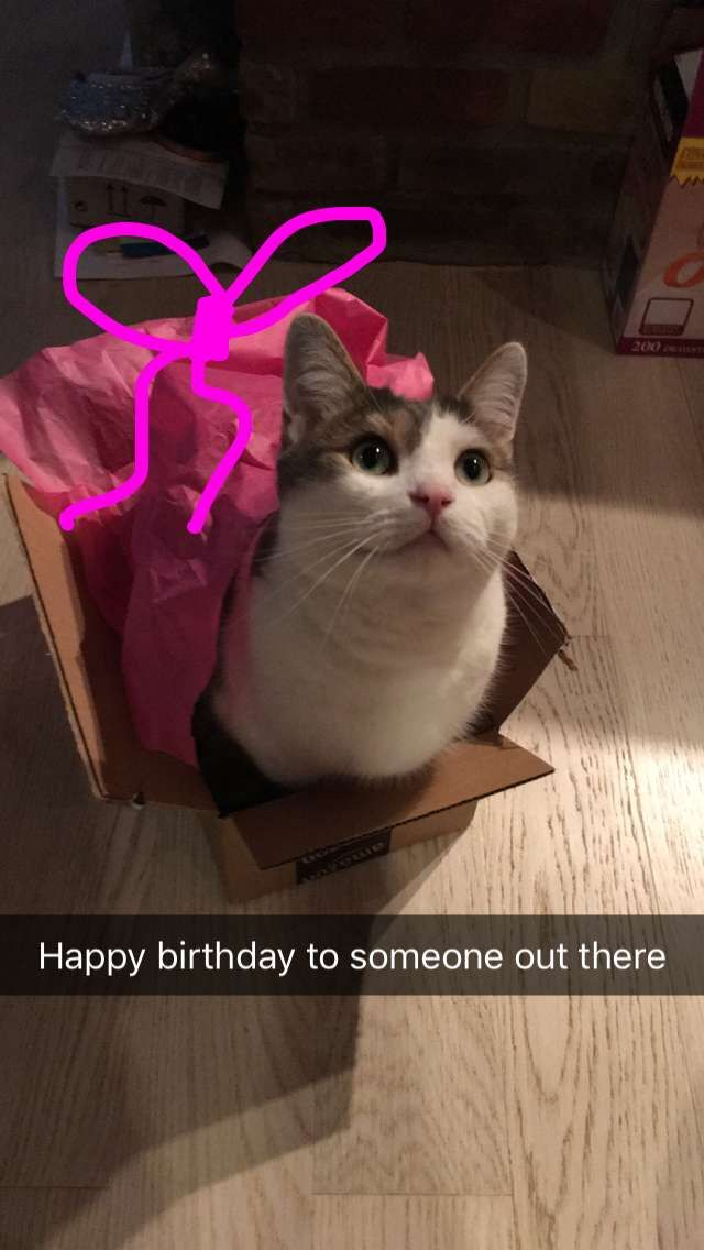 b1eb1259775 Simplynailogical s cat menchie! This was posted on my birthday ...