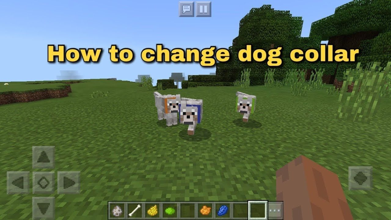Minecraft How to change your dog's collar YouTube Your