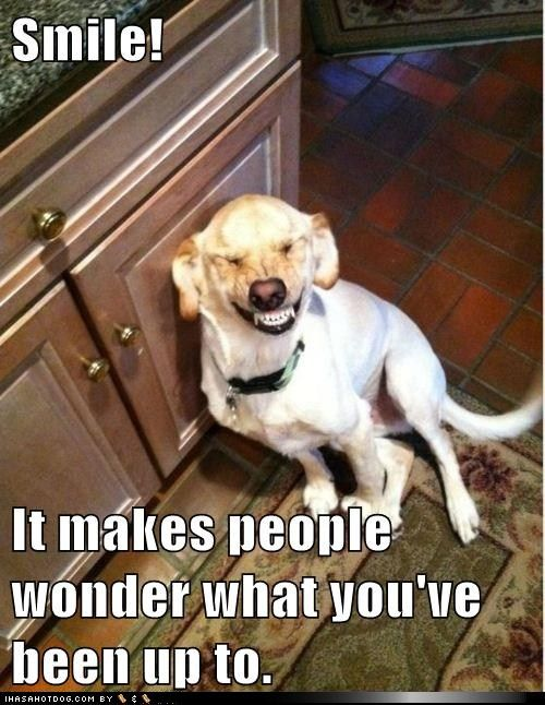 Dog Smile Children S Dentists Of Worcester Childrensdentistsofworcester Com Funny Animals Funny Dogs Funny Animal Pictures