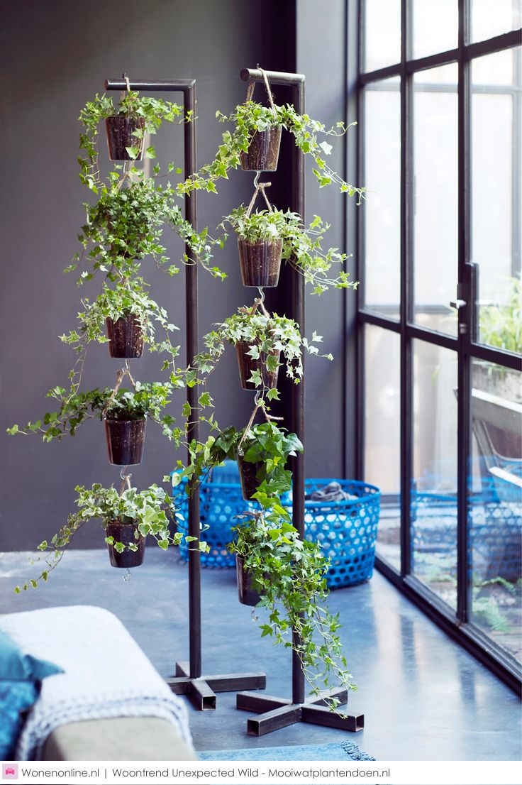 Woontrend Unexpected wild | Hanging plant, House and Interiors