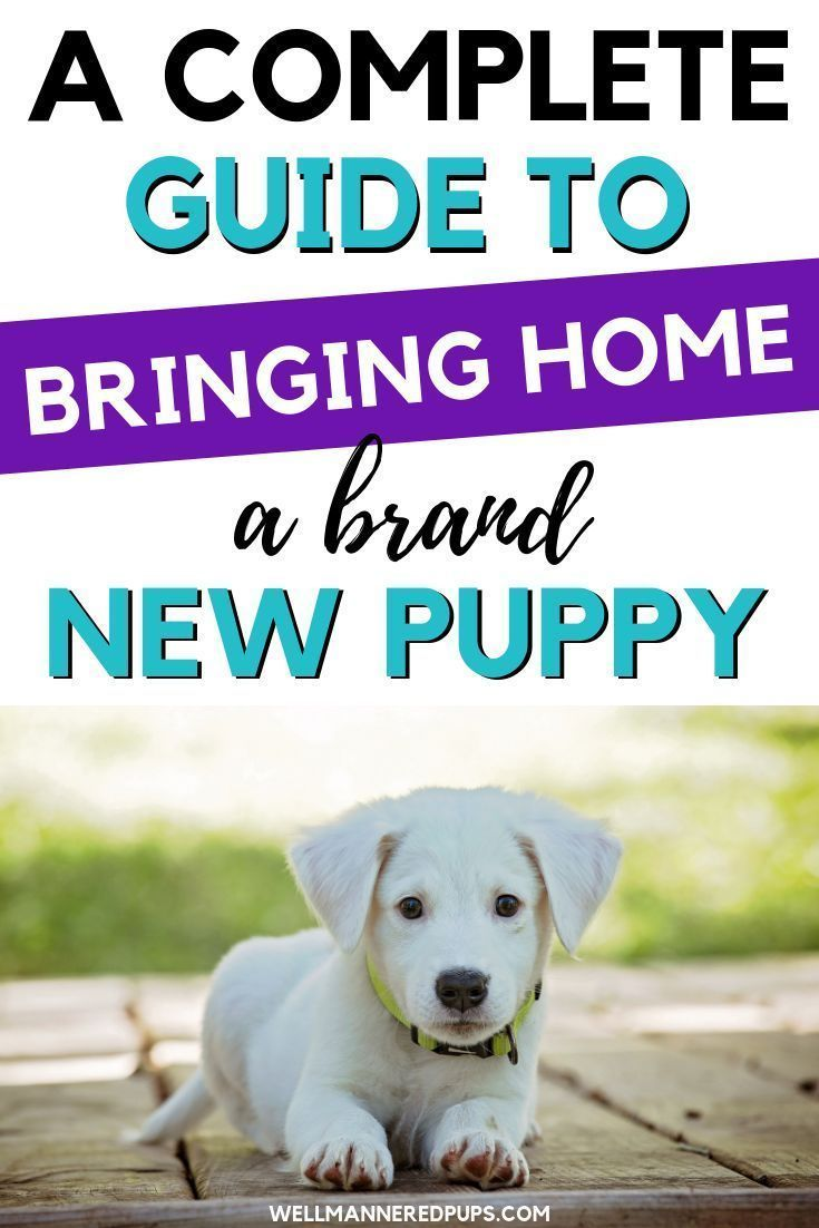 Bringing Puppy Home Guide - Well Mannered Pups