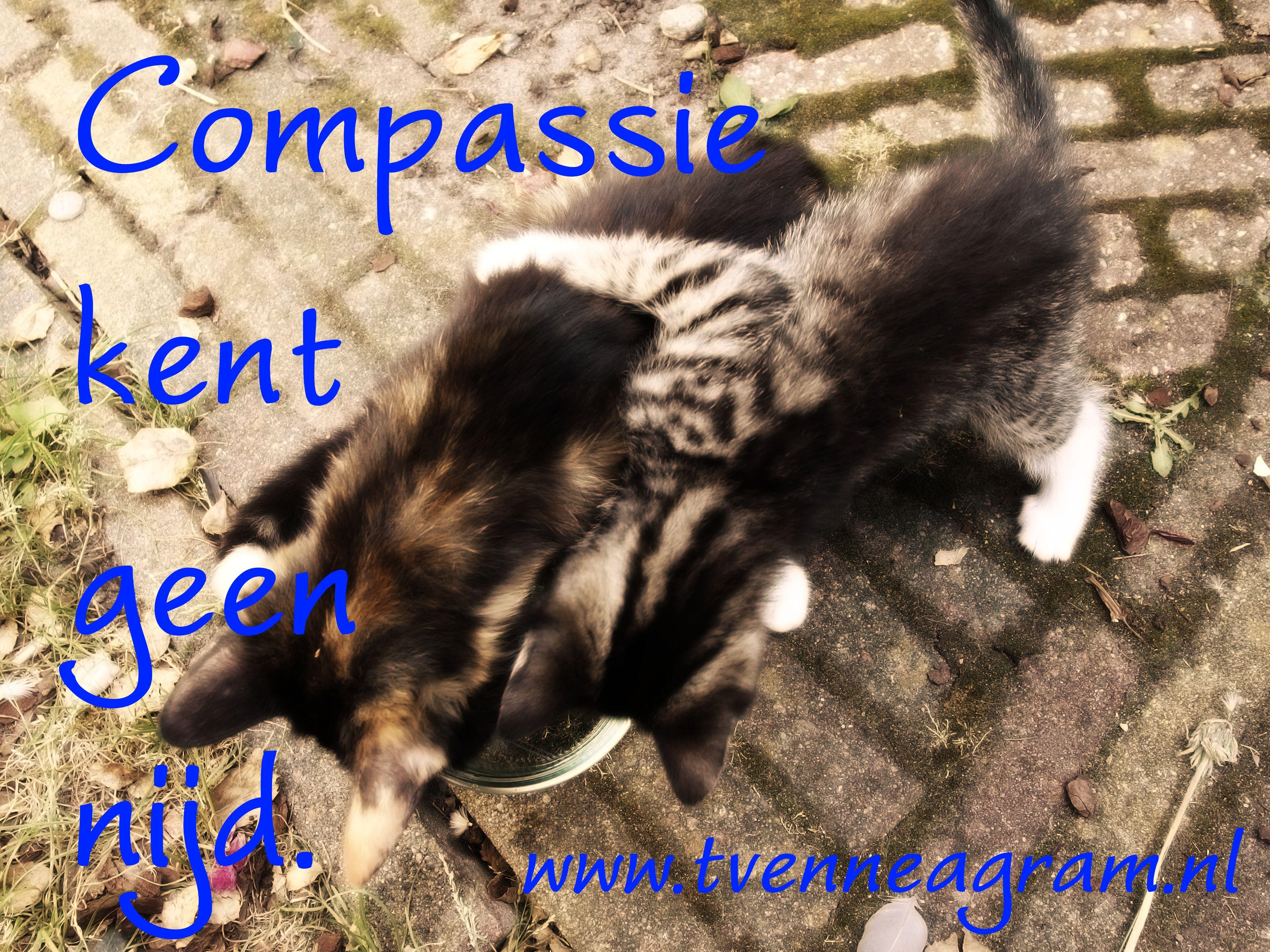 compassie nijd enneagramtype 4