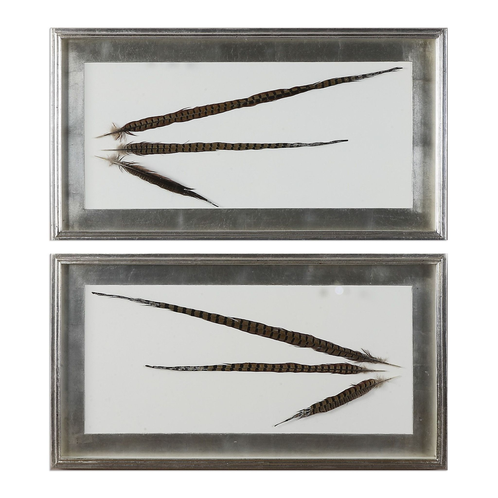 Uttermost pheasant feathers wall art s products pinterest