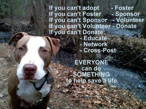 Please Do It For Those That Can T Help Themselves The Precious Animals In The World Adoption Animal Shelter