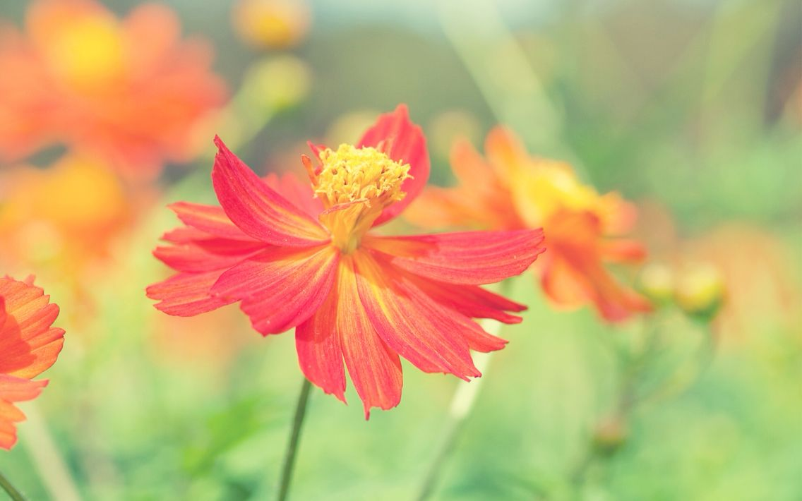 Orange And Red Flowers Really Beautiful Beautiful Flowers And
