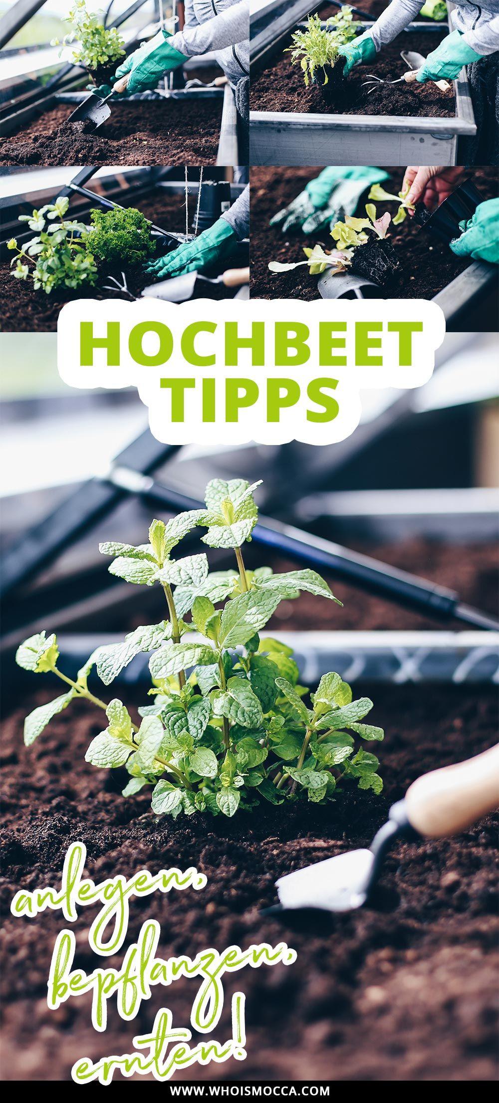 Hochbeet Tipps Anlegen Bepflanzen Und Leckeres Gemuse Ernten Hochbeet Hochbeet Bepflanzen Hochbeet Anlegen