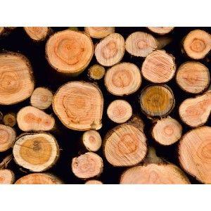 Fotomural de troncos de árboles cortados
