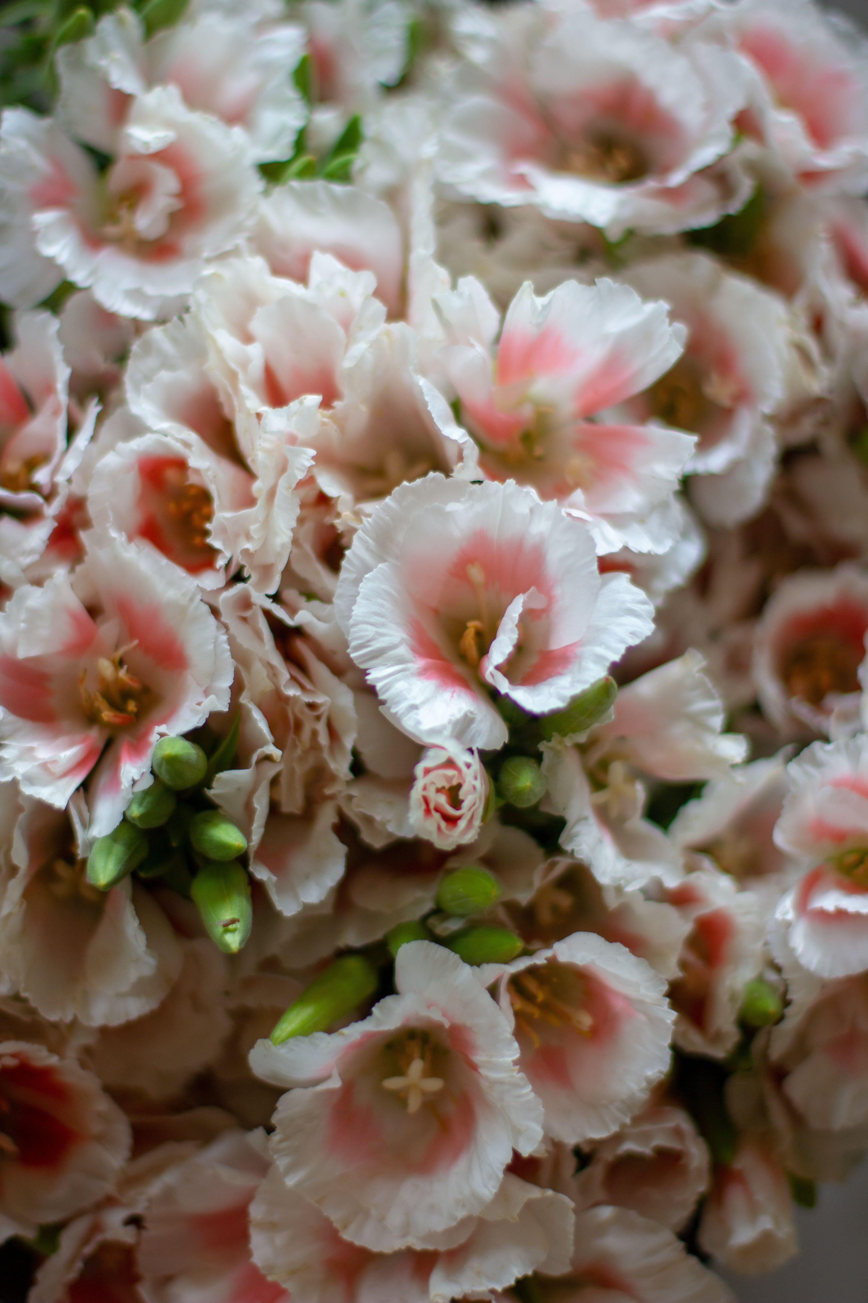 Flower Farm Love 'n Fresh Flowers (With images) Flower