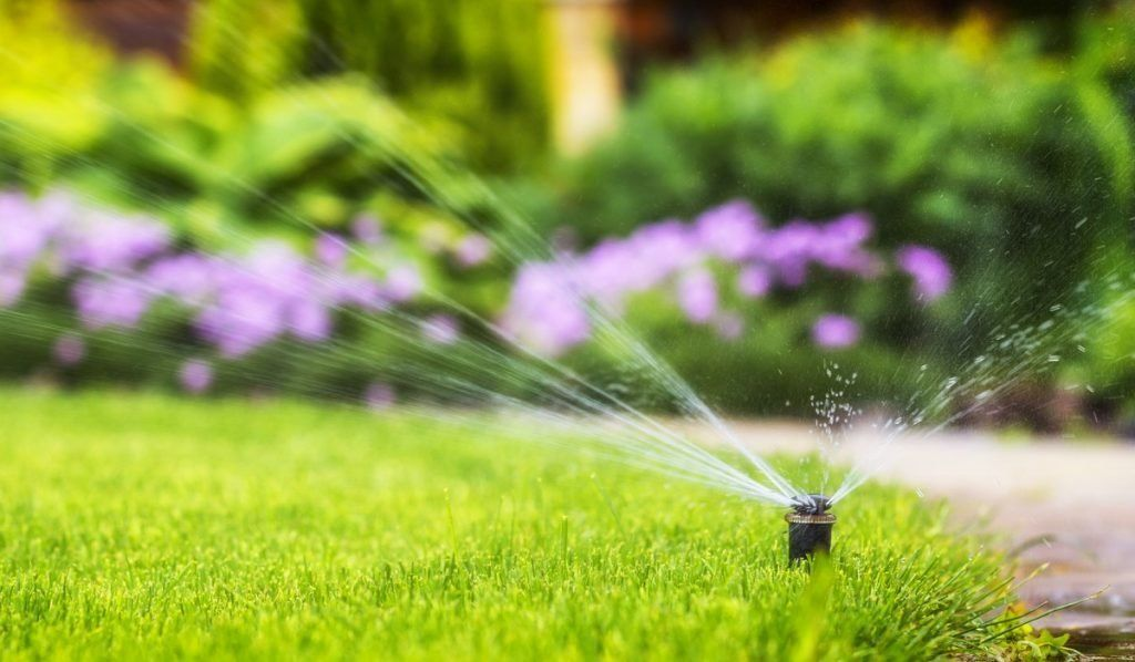 Solved How Long To Water Your Lawn In 2020 Green Lawn Lawn Warm Season Grass