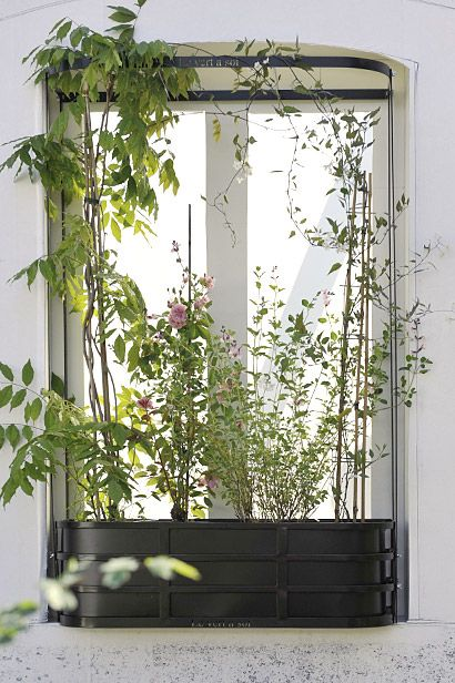 Jardiniere plante grimpante for Jardiniere pour plante grimpante
