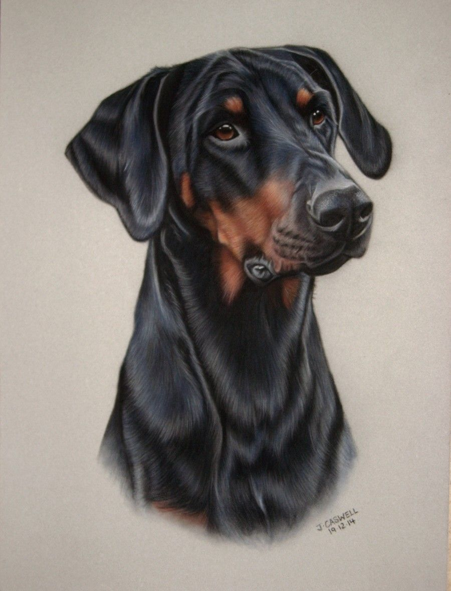 Doberman Pinscher Loyal And Fearless Dog Portraits Watercolor