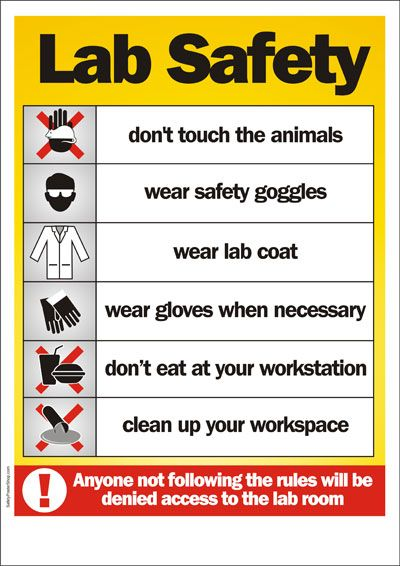Safety Poster Lab Safety Science Lab Safety Science Lab Safety Rules Lab Safety Rules