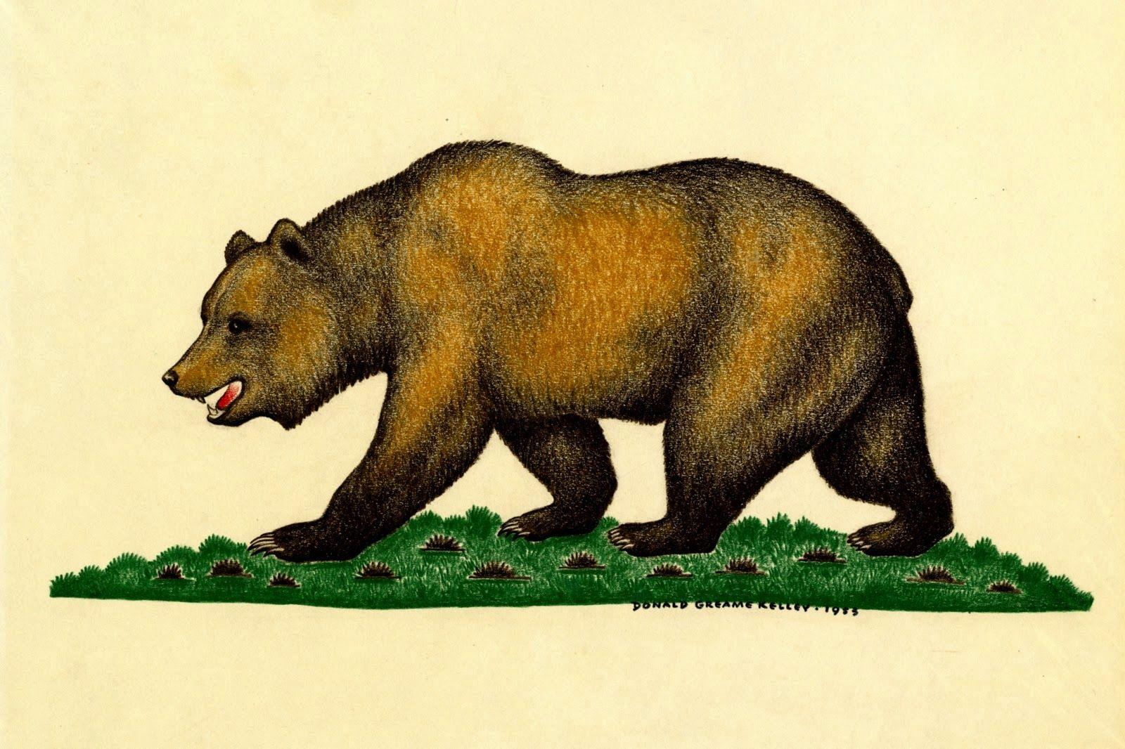 California Flag Bear Drawing