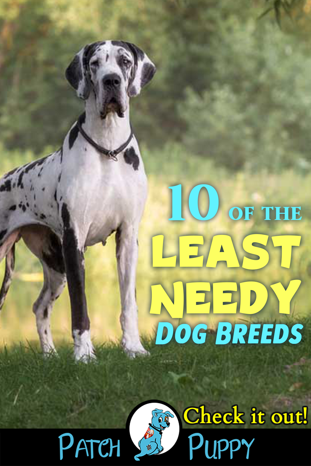 10 of the Least Needy Dog Breeds You'll be Surprised