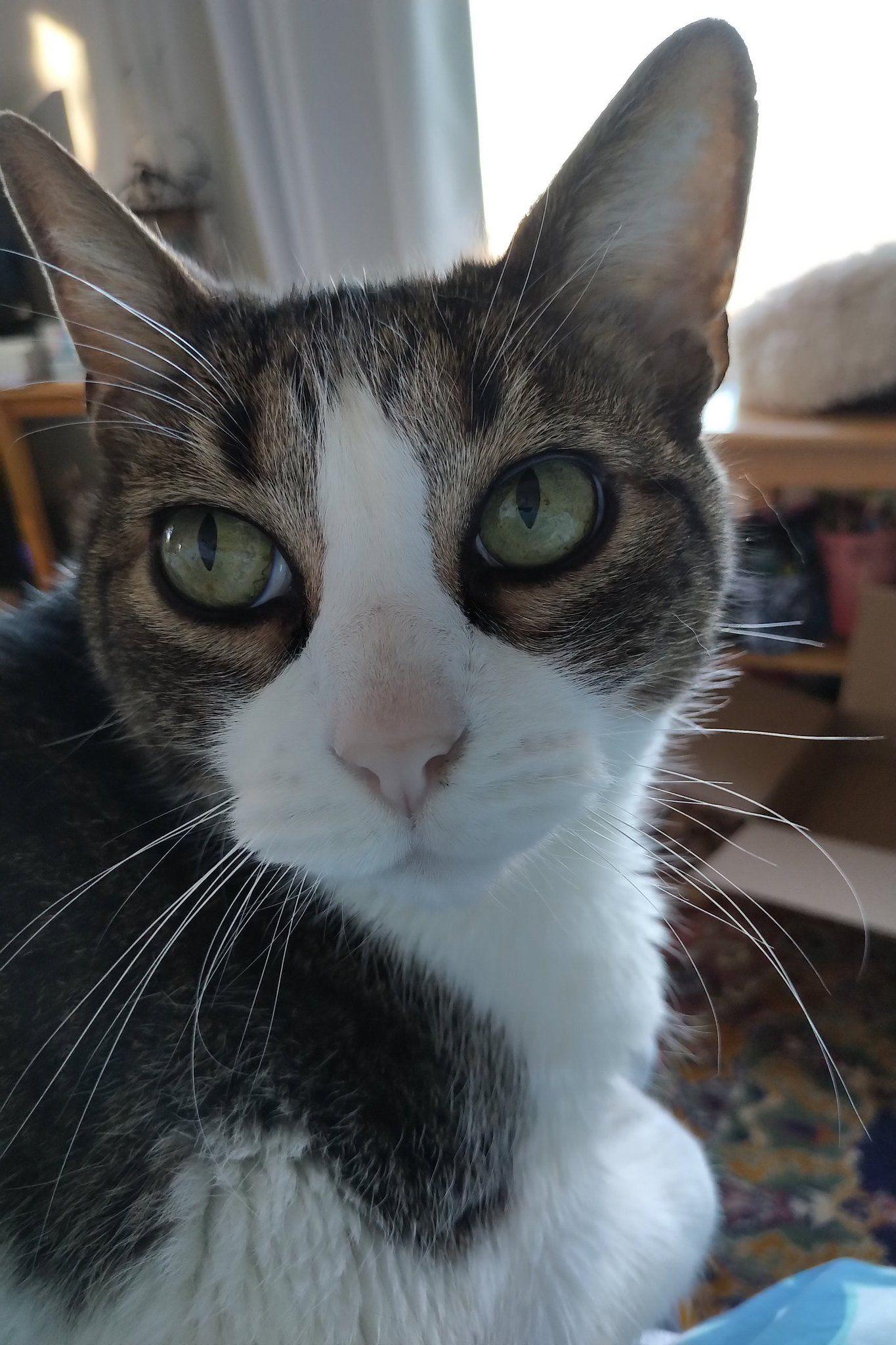 Tolstoy El Gato On Twitter Gatos Cats Kitty