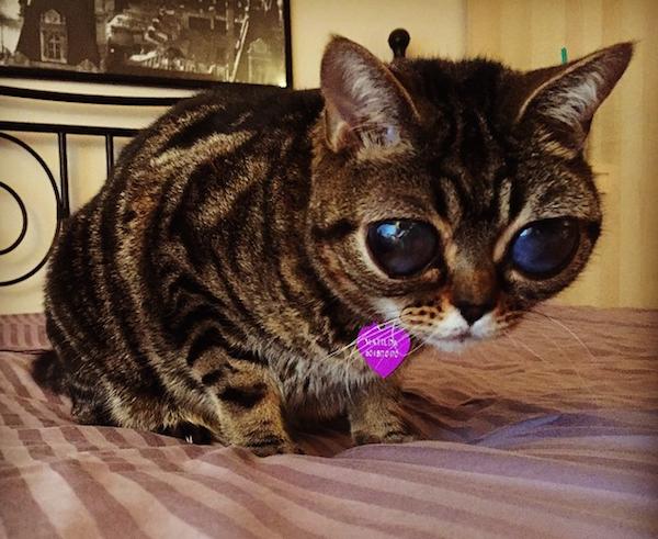 Matilda The Alien Cat Is Becoming An Instagram Star Catster