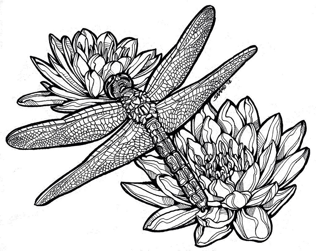 Black and white dragonfly drawing lily pads dragonfly